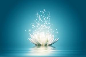 eveil-lotus